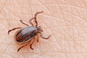 Maladie_Lyme_Prevention_Physiotherapie_quebec-300x200